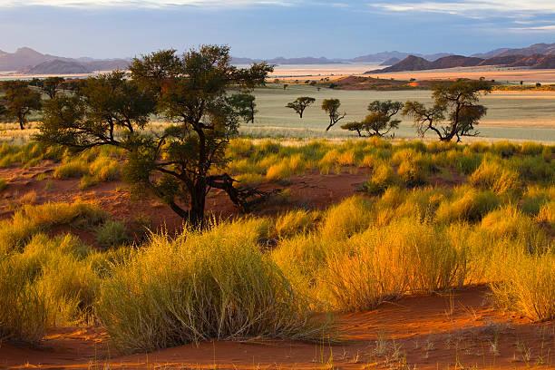 morgen in der wueste - afrikanische steppe dürre stock-fotos und bilder