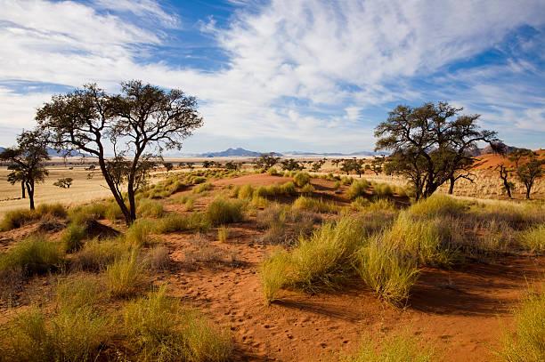 morgenstimmung in der wueste - afrikanische steppe dürre stock-fotos und bilder