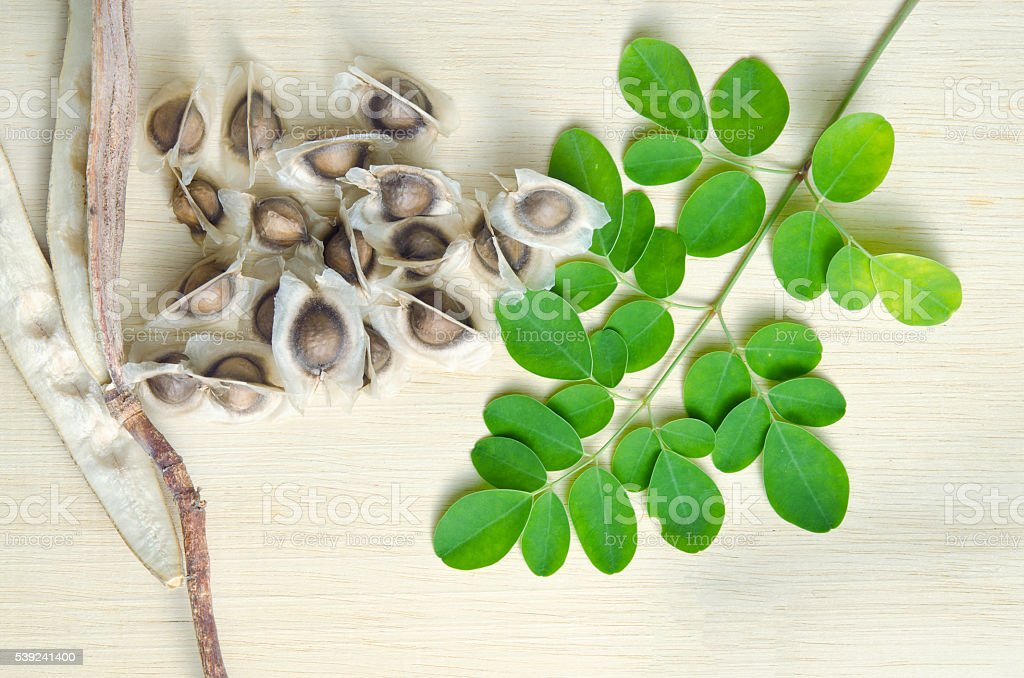Moringa leaf and seed on wooden board background royalty-free stock photo