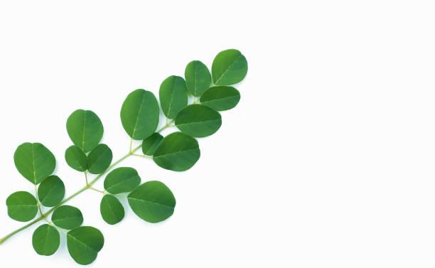 Moringa leaves on a white background picture id908499456?b=1&k=6&m=908499456&s=612x612&w=0&h=ol rkol9sadewkdso5yr3fdhiy80sprnvhl7refkbya=