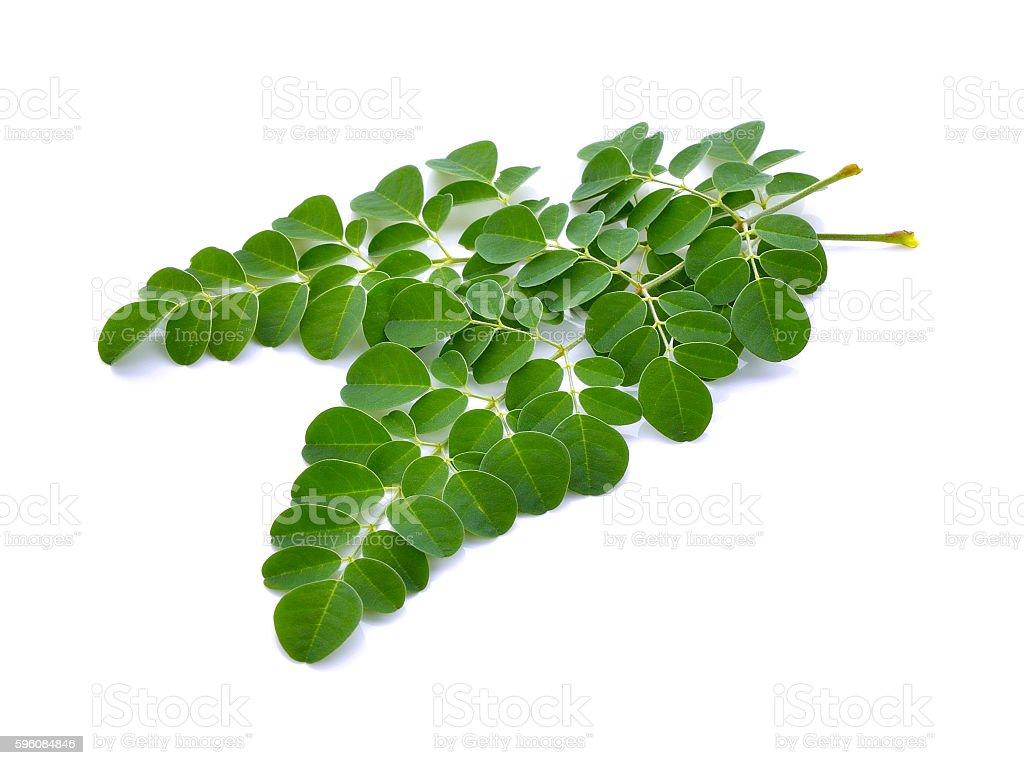 Moringa oleifera leaves on white background royalty-free stock photo