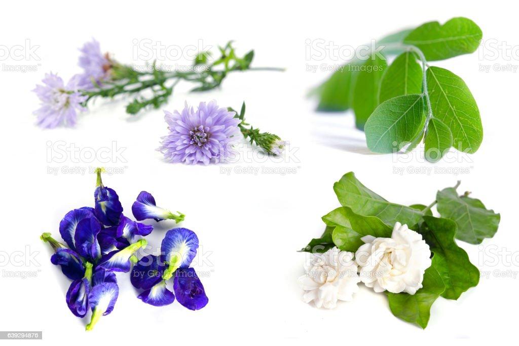 Moringa plant leaf, jasmine flower, butterfly pea, blue pea and stock photo