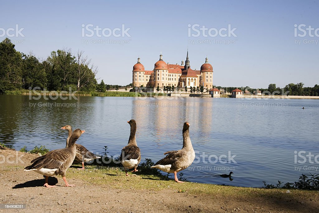 Schloss Moritzburg stock photo