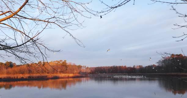 Morning at Lake Crabtree County Park stock photo