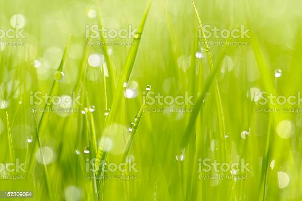 Morning At Paddy Field Stock Photo - Download Image Now