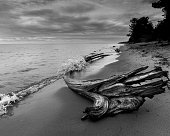 Black and white. Stormy cloudy morning at beach. Large driftwood had floated onto sand. Dark clouds from passing storm