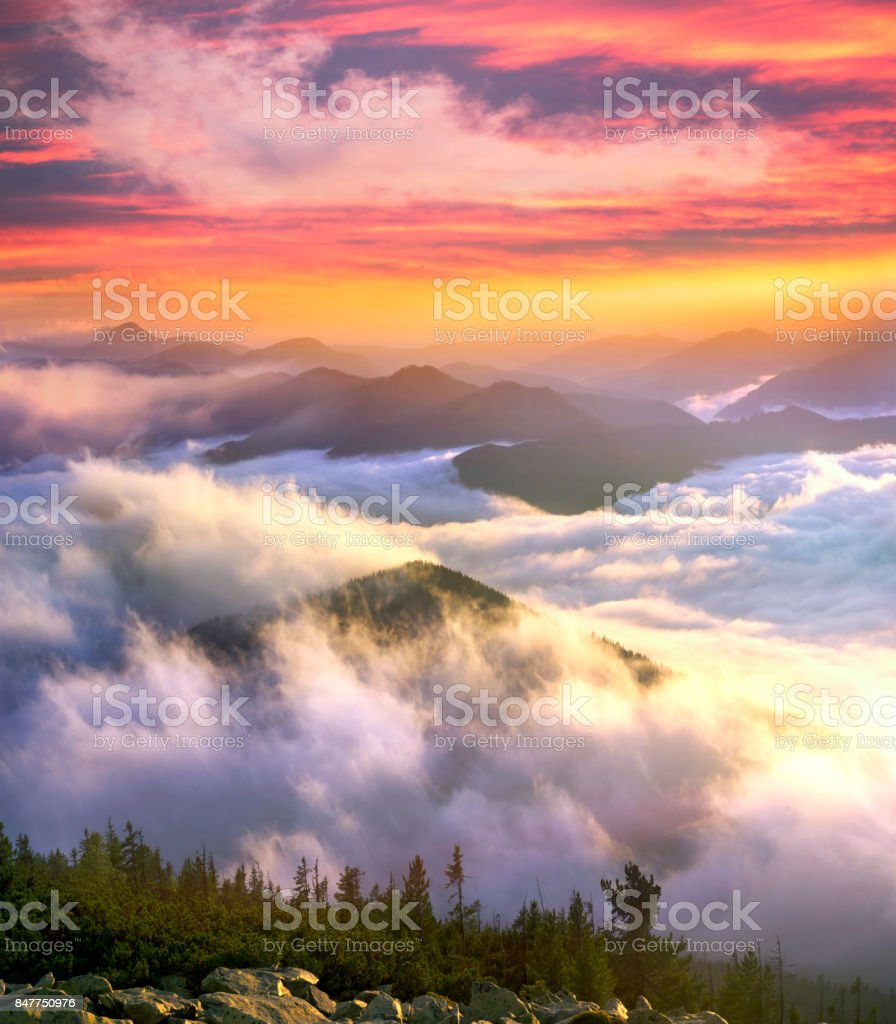 Morning at the top of the mountain Hamster stock photo