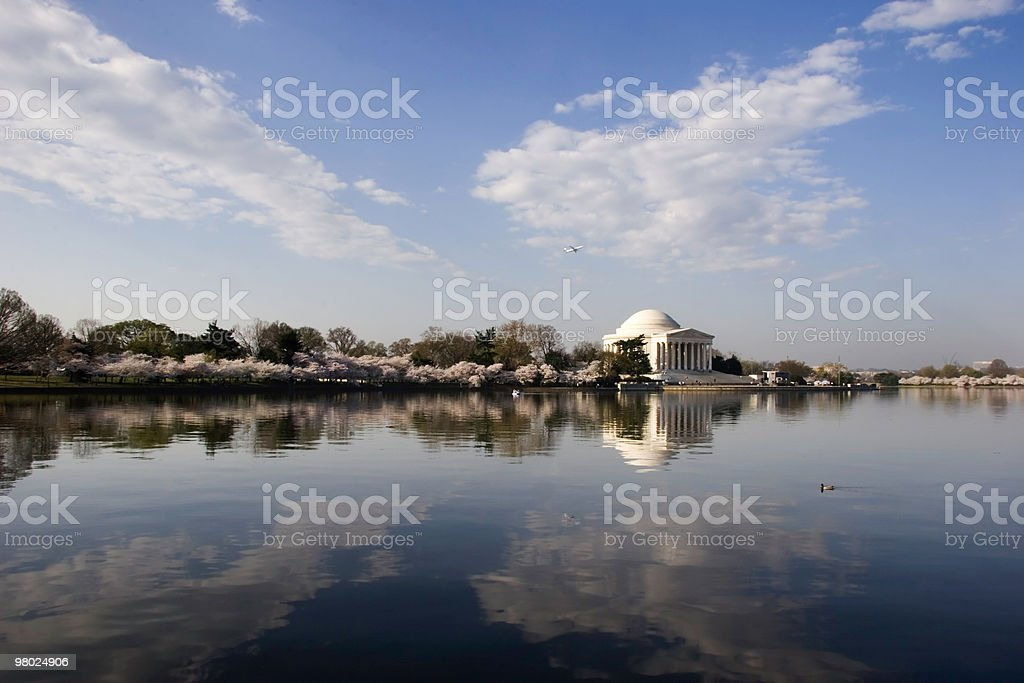 Morning Cherry Blossoms royalty-free stock photo