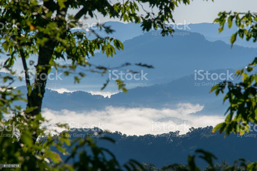 Morning Clouds in Trees in Mountains stock photo