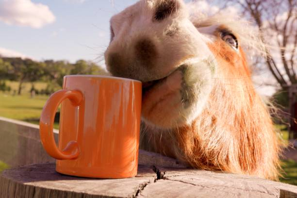 kaffee am morgen - lustige pferde stock-fotos und bilder