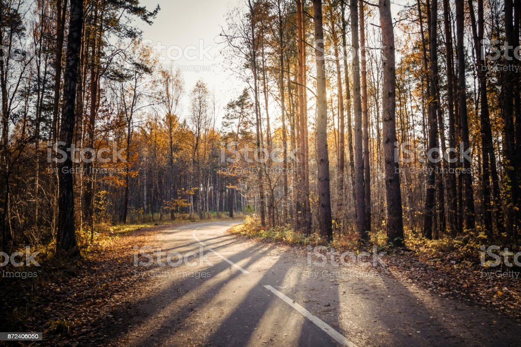 Morning country road stock photo