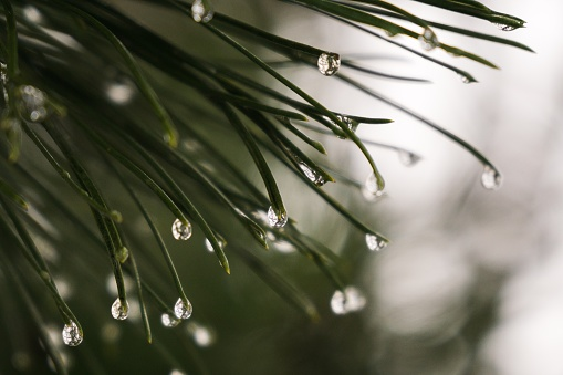 Morning dew and rain droplets on plants.