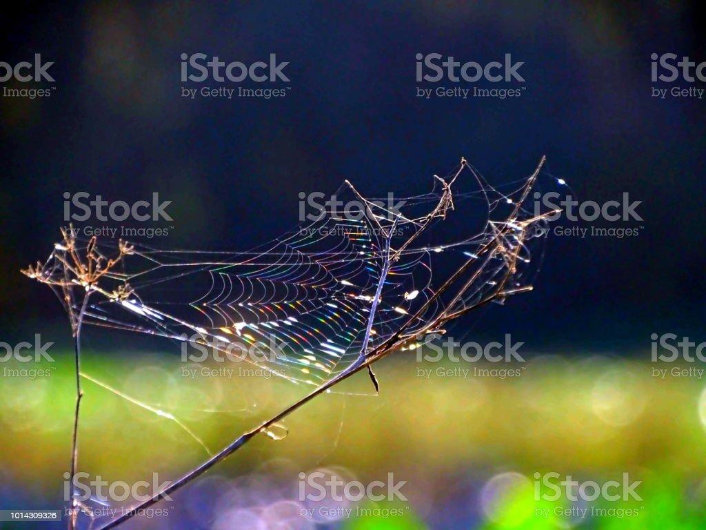 Morgentau Im Spinnennetz – Foto
