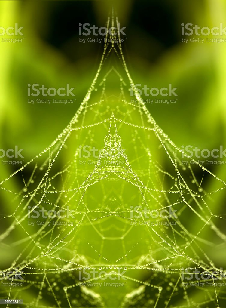 Morning dew on a spider web royalty-free stock photo