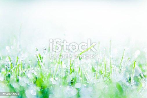 672372726istockphoto Morning dew on grass 524879953