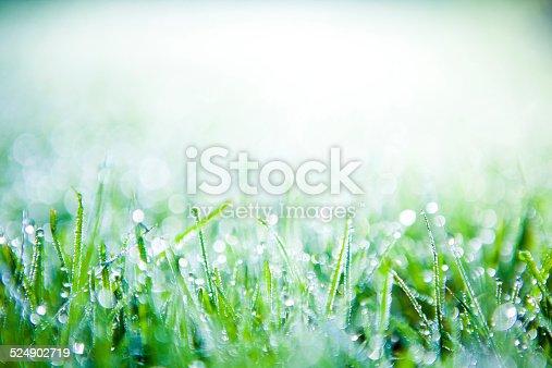 672372726istockphoto Morning dew on grass 524902719