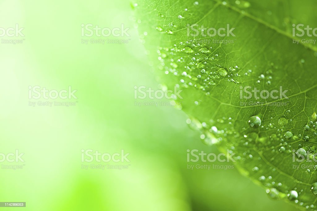 Morning Dew on leaf royalty-free stock photo