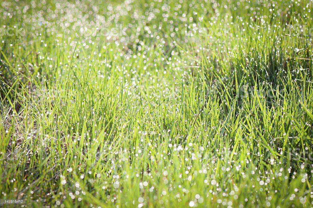 Morning dew. royalty-free stock photo