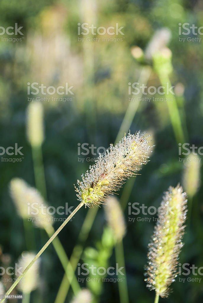 Morning Dew stock photo