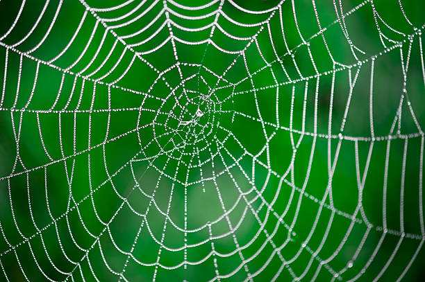 morning dew. shining water drops on spiderweb - spider web stock photos and pictures