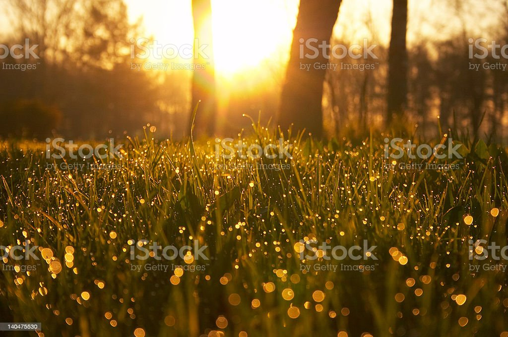 Утренняя роса сверкающими на солнце стоковое фото