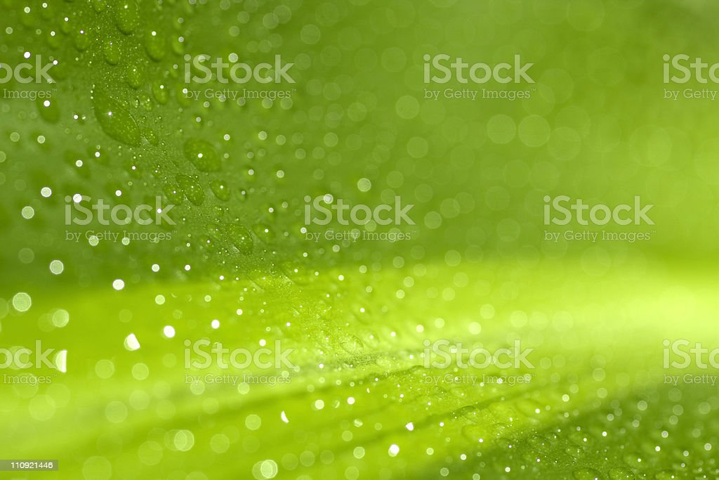 Morning Dew XL royalty-free stock photo