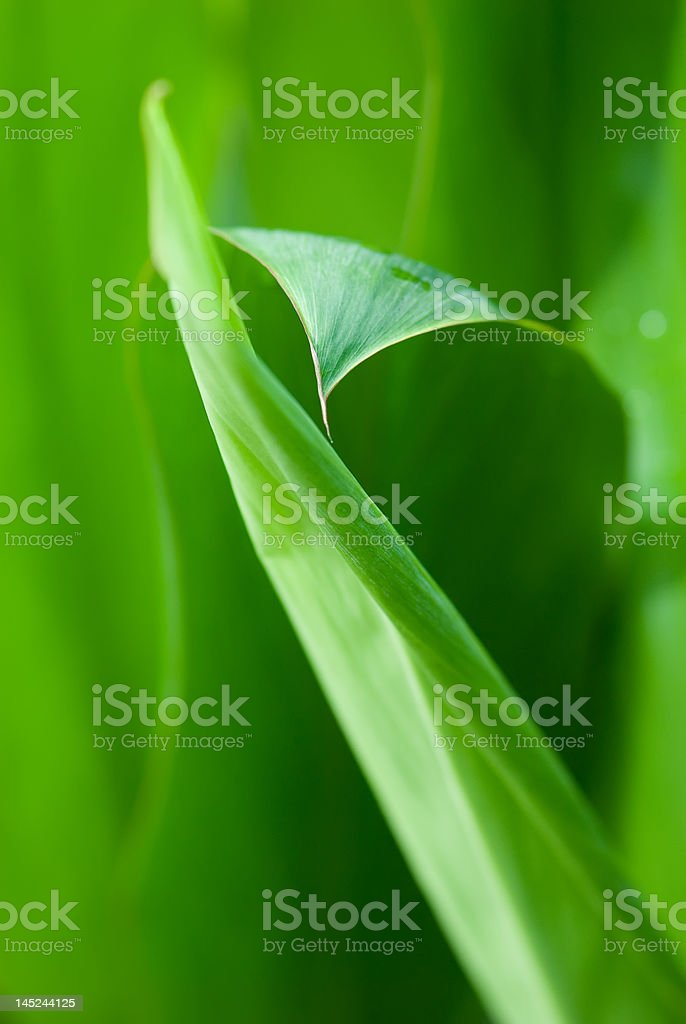 Morning dews on tropical flowers stock photo