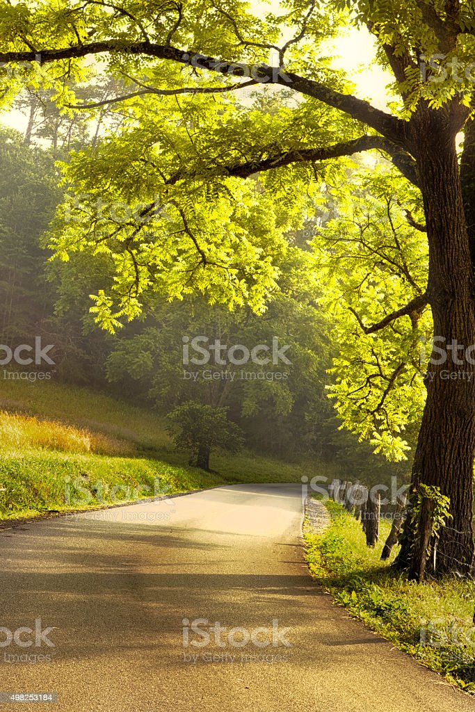 Morning Drive stock photo
