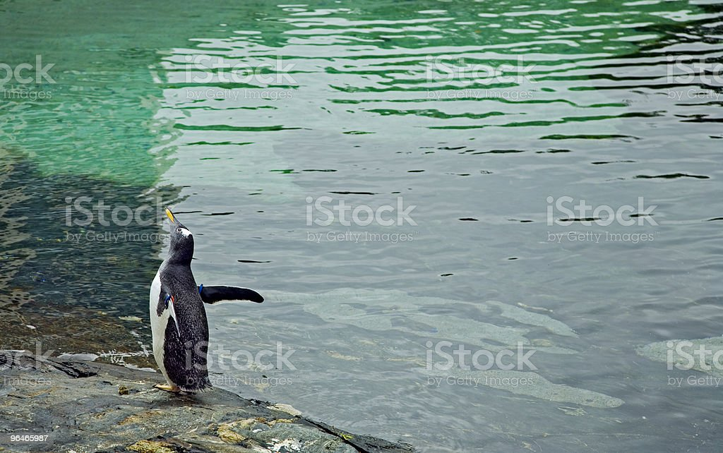 morning exercise for penguin royalty-free stock photo