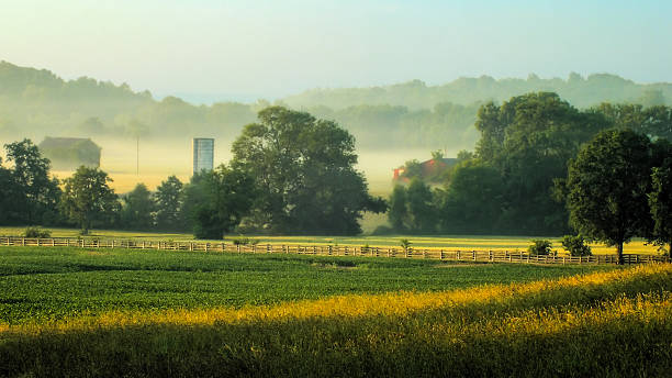 Morning Farm stock photo