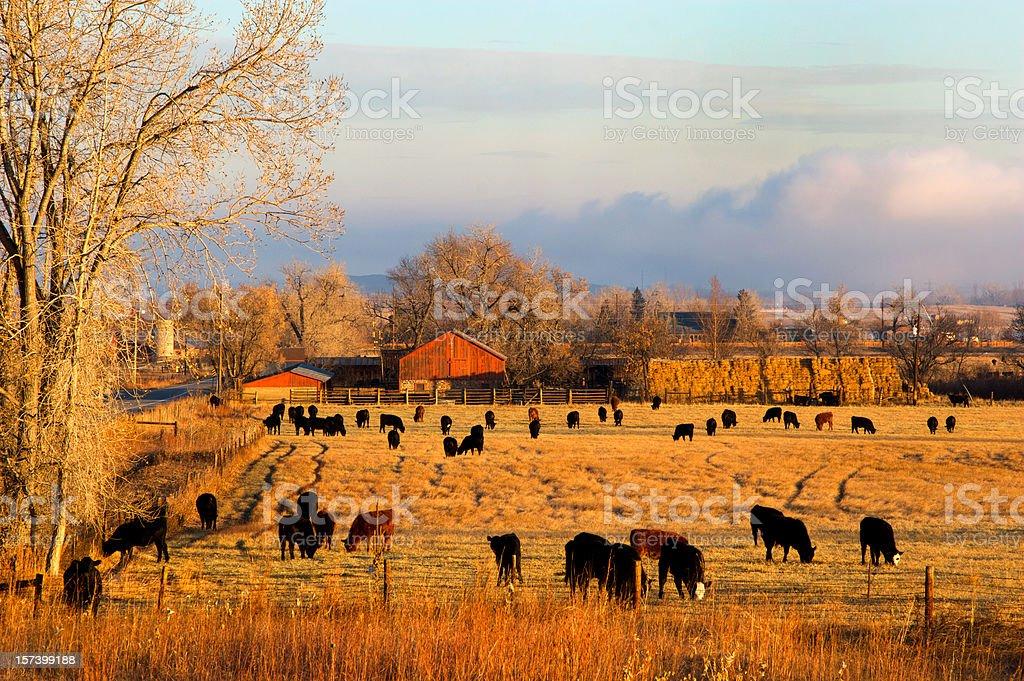 Morning Farm Scene stock photo