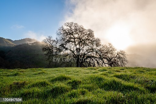 istock Morning Fog at Mount Diablo State Park 1204947534