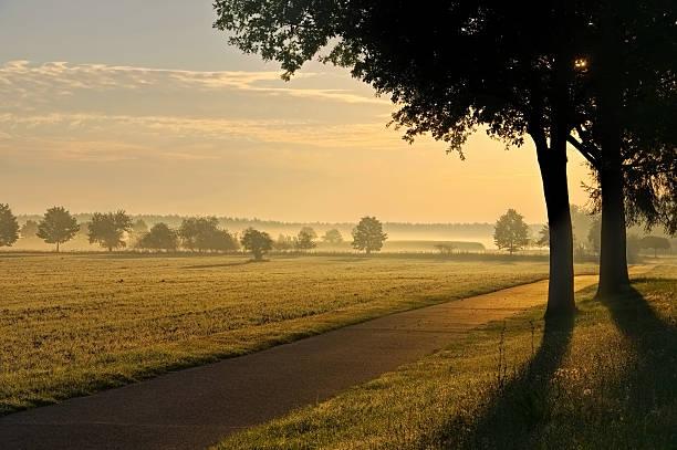 morning fog in a rular area - 브란덴부르크 주 뉴스 사진 이미지