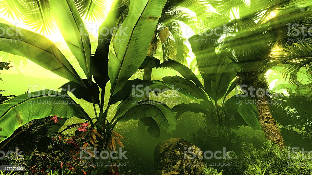 Morning fog in dense tropical rainforest royalty-free stock photo