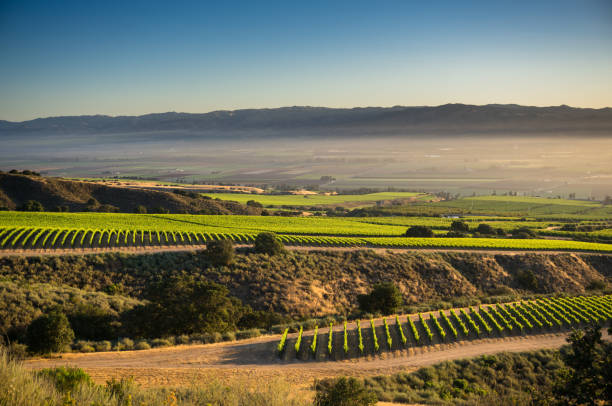 Morning Fog in Santa Lucia Highlands at Sunrise stock photo
