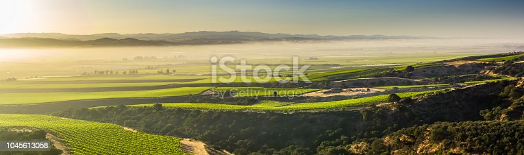 Aerial shot of lush green vineyards in Monterey County, in Northern California wine country.