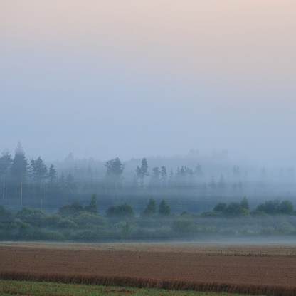 istock morning fog over the forest in Latvia 1174161750