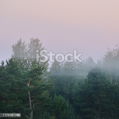 istock morning fog over the forest in Latvia 1174161766