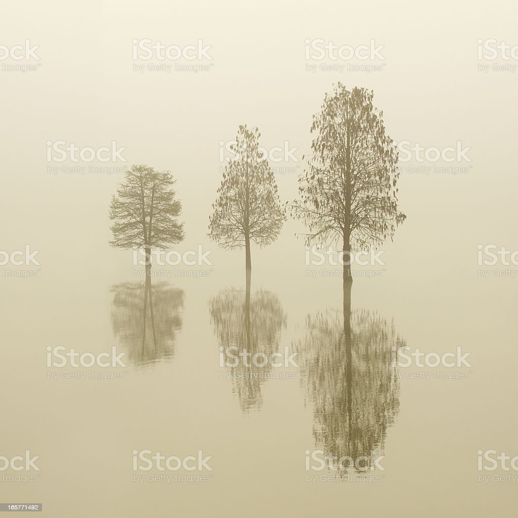 morning fog royalty-free stock photo