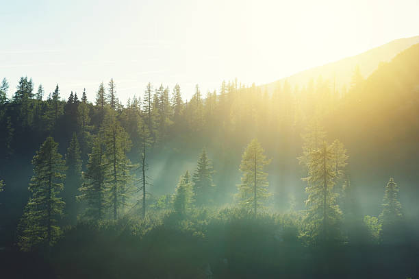 Morning fog up in the mountains stock photo