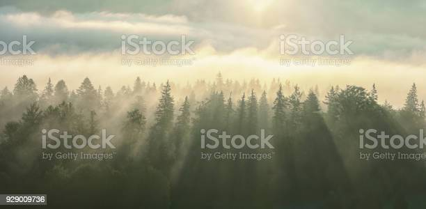 Morning fog with sun rays on the wooded mountans picture id929009736?b=1&k=6&m=929009736&s=612x612&h=smmvyi5kznowbwehlydztbqhmvwufsbzfjisvtiuphw=