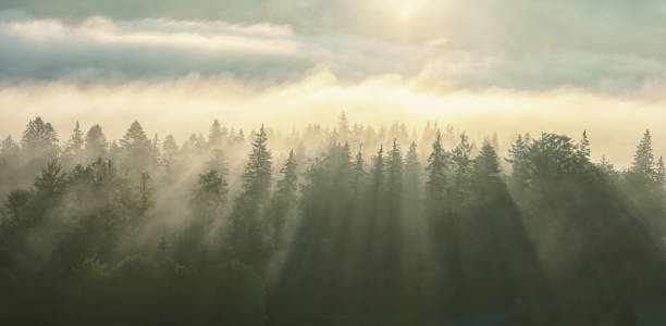 morning fog with sun rays on the wooded mountans. - trees in mist stock pictures, royalty-free photos & images