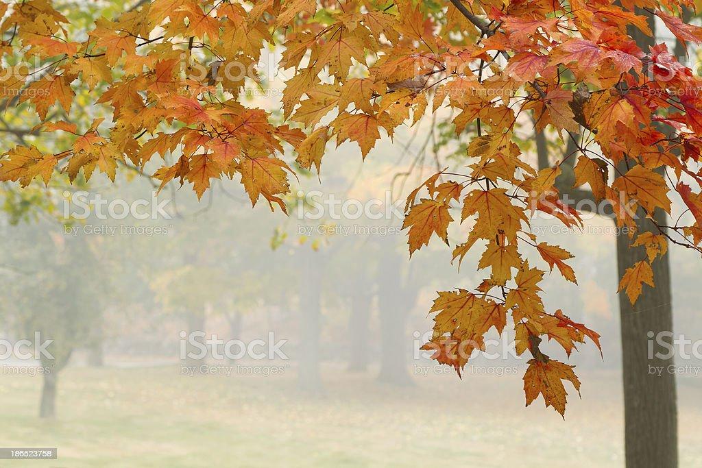Morning Foliage royalty-free stock photo
