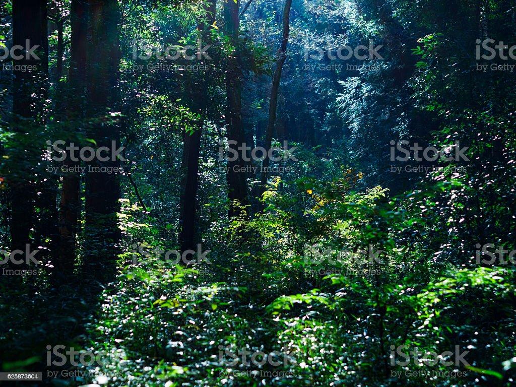 朝の森 ストックフォト