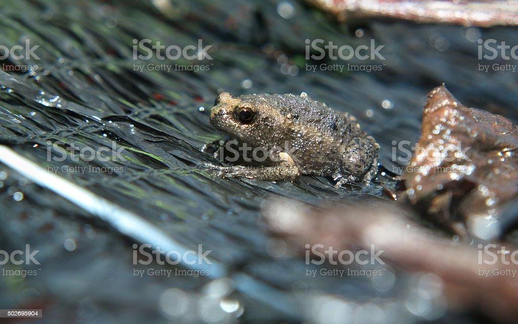 morning frog stock photo