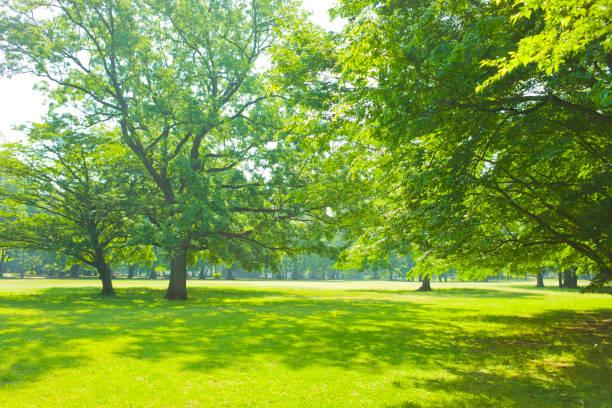 morning garden - parque público imagens e fotografias de stock