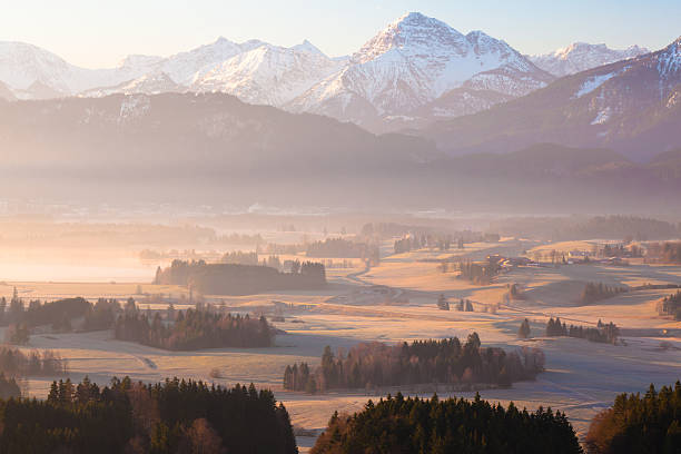 morning glory in bavaria germany stock photo