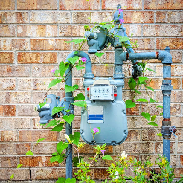 Morning Glory on a Water Meter stock photo
