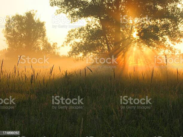 Morning Glory Stock Photo - Download Image Now