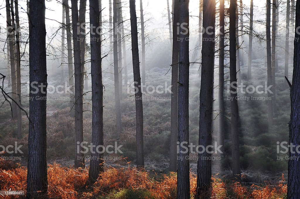 Morning glow royalty-free stock photo
